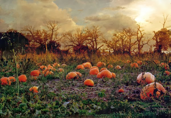 Haunted_Pumpkin_Patch_by_SolStock